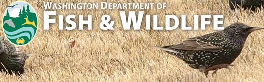 Java jobs in lacey wa for Fish and wildlife jobs